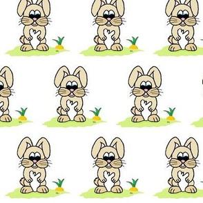 Bella_bunny