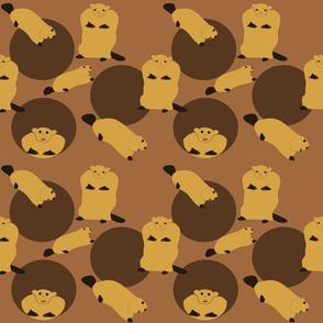 Groundhogs chasing