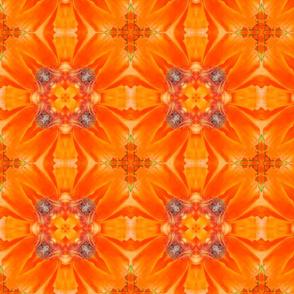 Orange poppy square