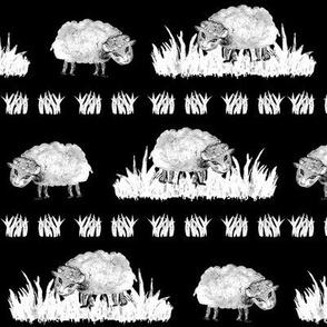 SOFT AS A CLOUD SHEEP Field BW on Black