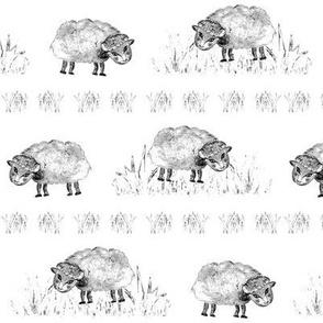 SOFT AS A CLOUD SHEEP Field BW on White