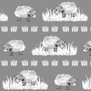 SOFT AS A CLOUD SHEEP Field BW on Grey