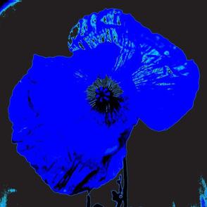 blue poppy-ch
