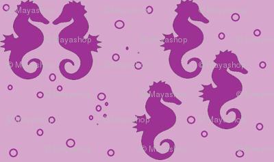 seahorse-ch-ch