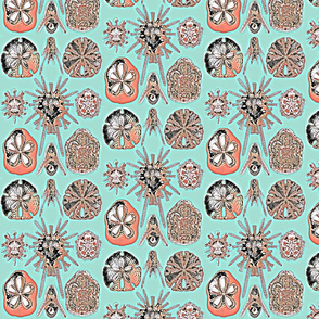 haeckel contest colors hd