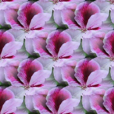 Rgimp_ssd_regal_geranium_closeup_cropped_img1607_shop_preview