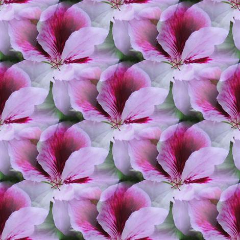Regal Geranium fabric by missourah_gal on Spoonflower - custom fabric