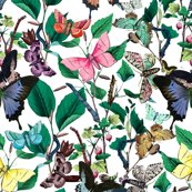 Rrbutterfly_sanctuary___peacoquette_designs___copyright_2015_shop_thumb