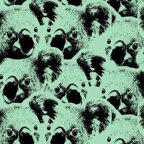 Koalas pistache