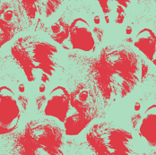 Koalas pistache/red