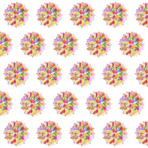 Zinnia Multi-colored