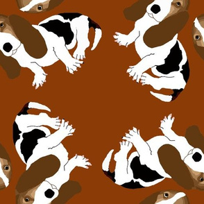 Basset Hounds on Dark Brown
