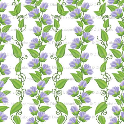 Rambling  Sweetpea Vines  Purple