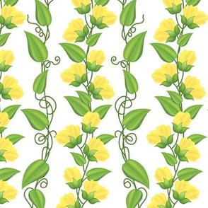 Rambling  Sweetpea Vines Yellow