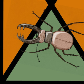 jaw_insect