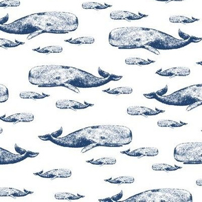 whale_mix_up_distressed-ch