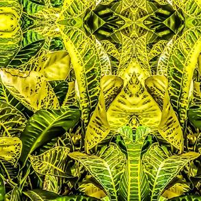 Hawaiian Croton Plant