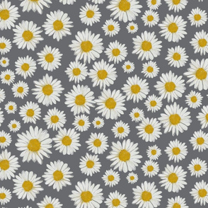 daisies on gray
