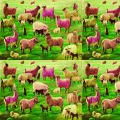 Angora Goats No 3