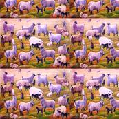 Angora Goats No. 1