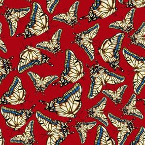 Desert Swallowtail Butterfly Red