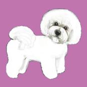 Bichon Frise Puppy dog love Purple