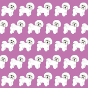 Bichon Frise Puppy dog love Purple
