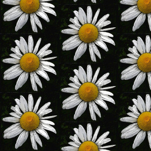 Daisy black and white and yellow - small