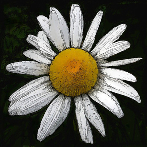 Daisy   big - black and white and yellow
