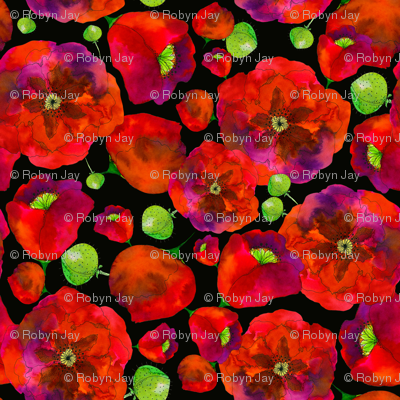 Poppies on black