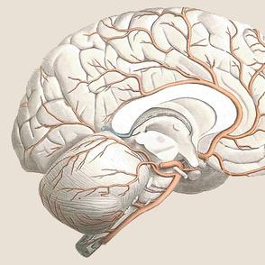 Brain Pillow Side 2