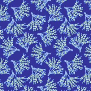seaweed fans