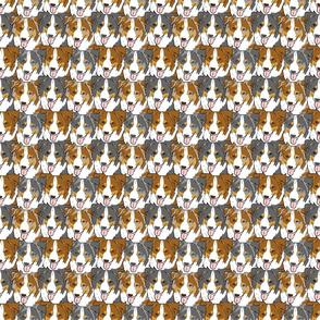 Herd of happy Aussie faces