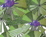 Australica_palm_exotic_flower1_thumb