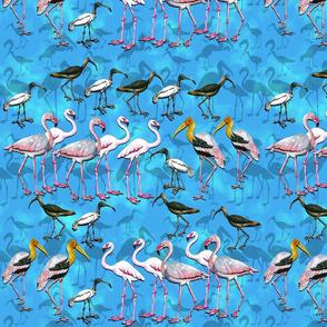 India Birds Ver2