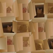 Rrcubist_cats_in_cardboard_boxes_shop_thumb
