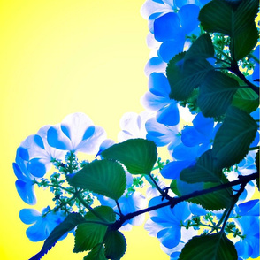 dogwood series.blue and yellow