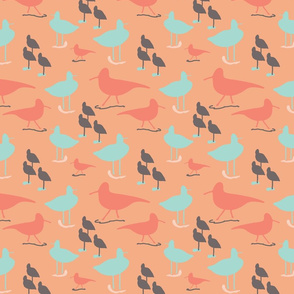 Shorebirds in color