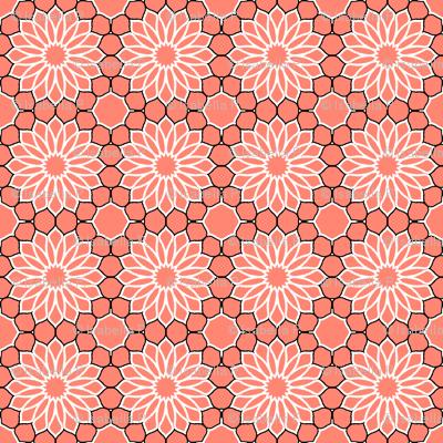 Rock Daisies Coral