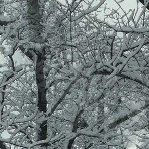 Snow_trees_2