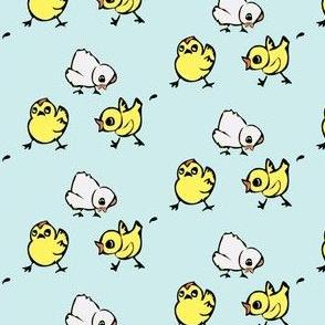 Chicks on pale aqua