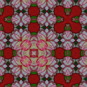 Dahlia Kaleidoscope 03