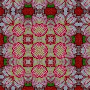 Dahlia Kaleidoscope 04
