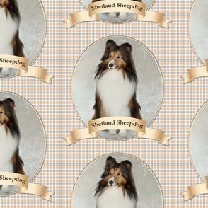 Sheltie on Plaid