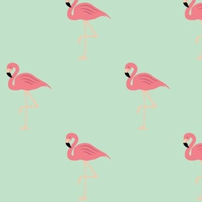Flamingos on Mint
