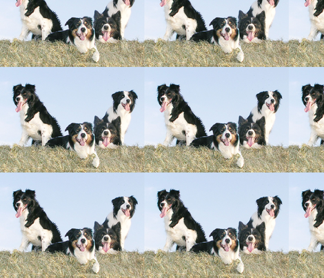 Border Collies in the hay fabric by dogdaze_ on Spoonflower - custom fabric