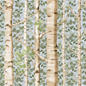 Birch Grove in Summer
