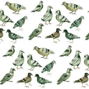 pigeons (large size)