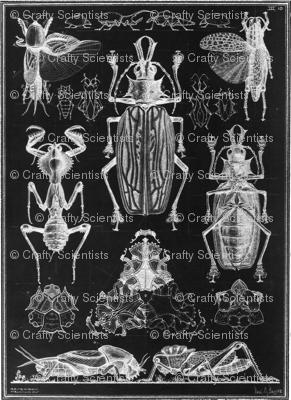 vintage animal sketches - beetle black
