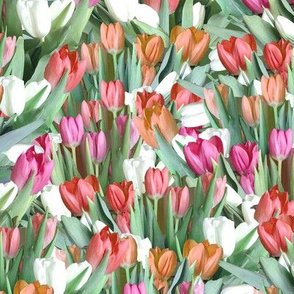 Garden of Tulips - Pink, Orange, Red